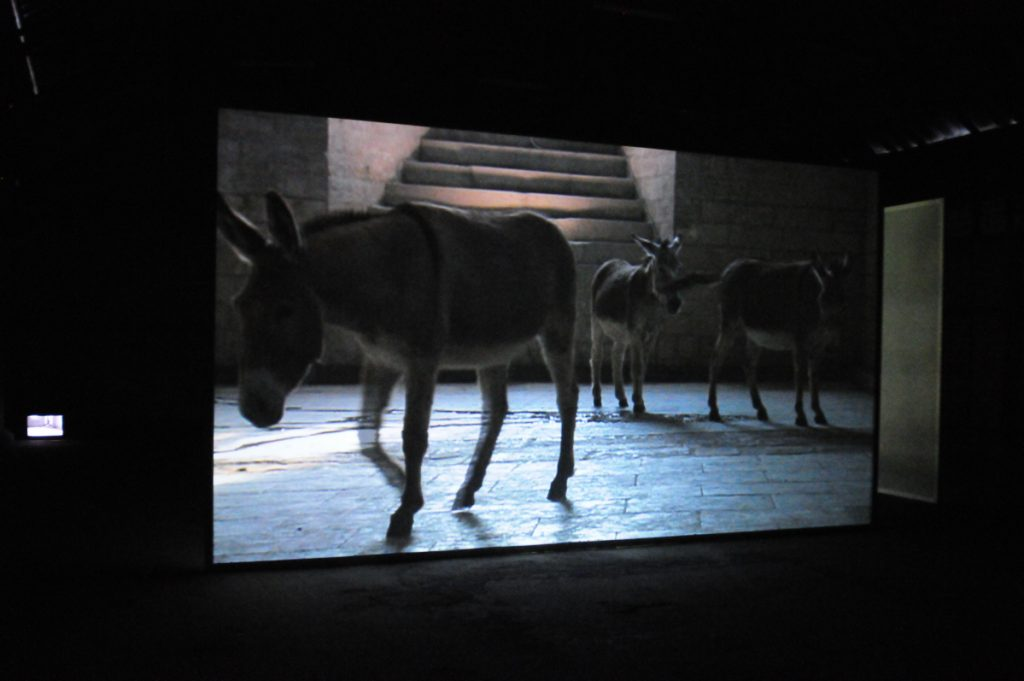 Douglas Gordon, Travail with my Donkeys, 2008, video, edition of 3+1 AP