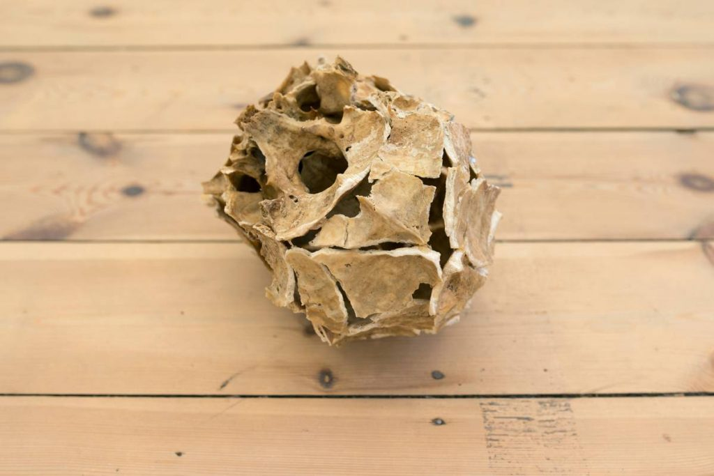 Ariel Schlesinger, Untitled (Inside Out Skull), 2014, Skull, glue 15 x 20 x 17 cm, Unique