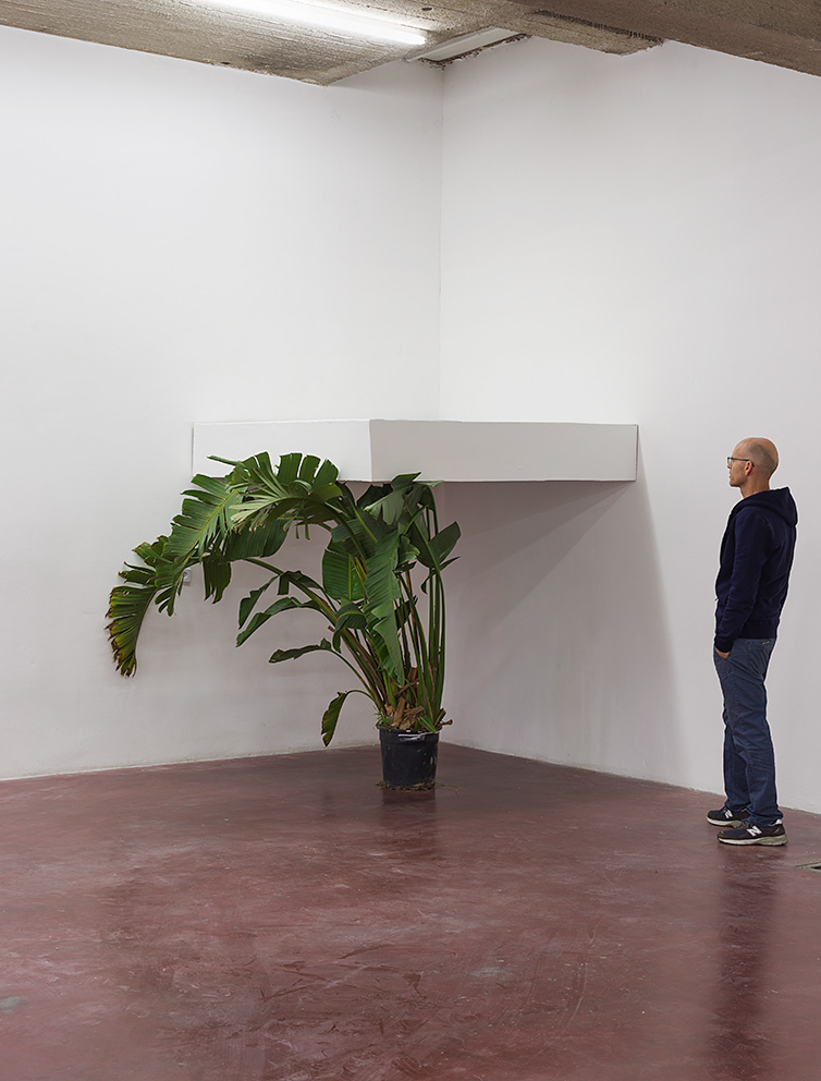 David Maljkovic, Untitled, 2012, Banana plant, shelf dimensions (30x180x180 cm), Unique