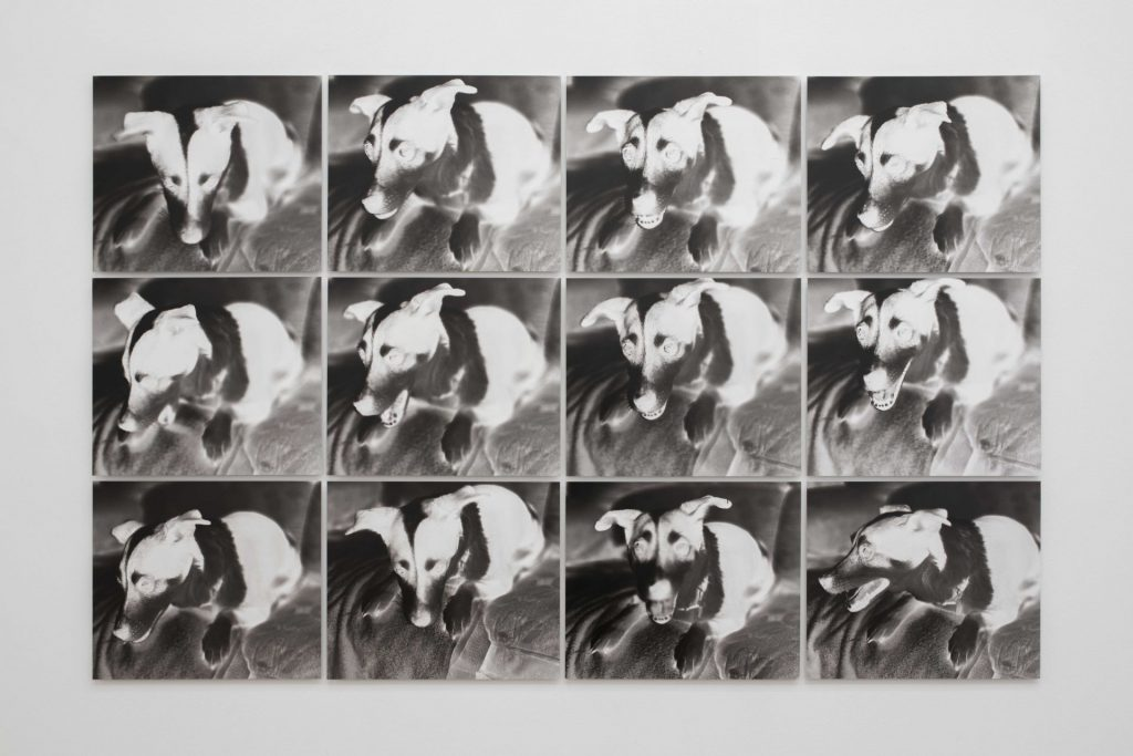 Jonathan Monk, My Mother's Dog Gets Nervous When I Go Home, 2017, black and white inkjet print mounted on aluminium, 43 x 35.5 x 1.5 cm each, edition of 3 + 1AP