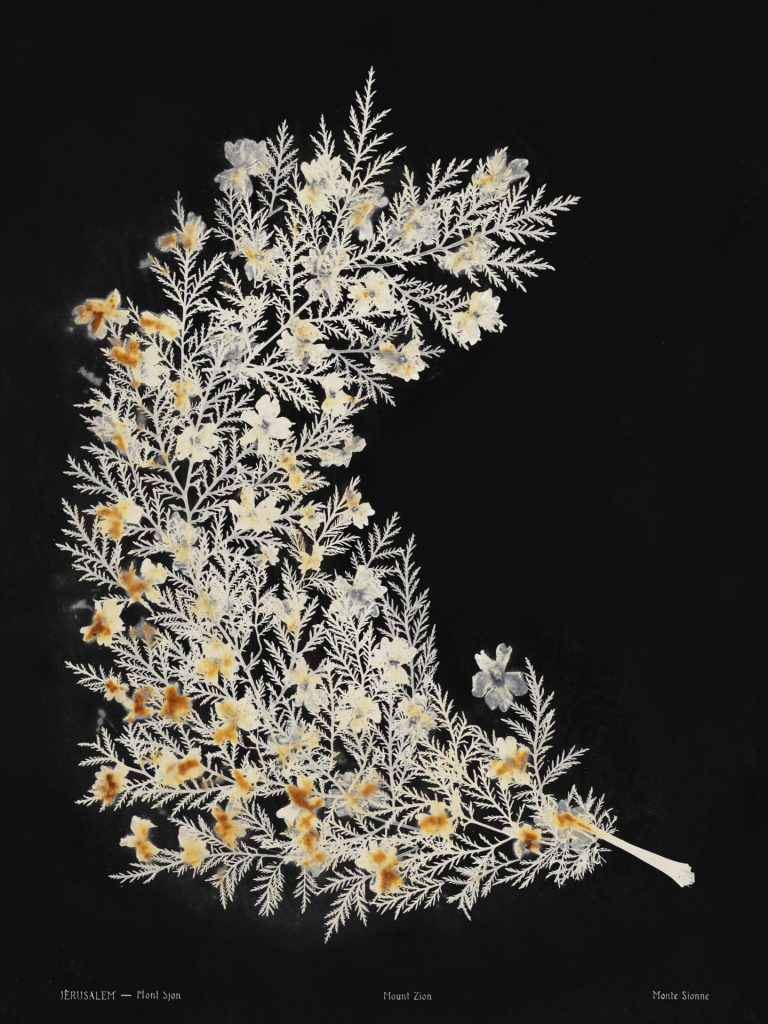 Lilies of the field #2, Jerusalem, Mount Zion, 2018, archival inkjet print, 110 x 160 cm, edition of 3 + 1AP
