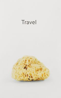 haim-steinbach-travel-69