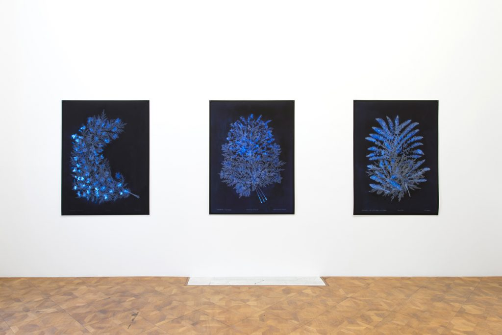 Dor Guez, Lilies of the Field, 2018, Exhibition view, Dvir Brussels