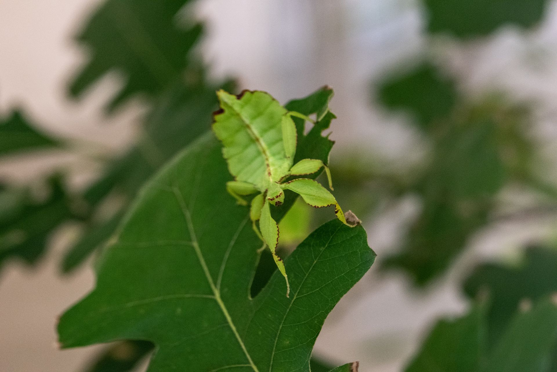 A Transparent Leaf _ CCS Bard 29 _ Chris Kendall